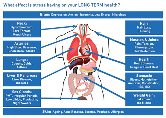 biological stress effects on body