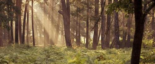 counselling & psychotherapy metaphor forest